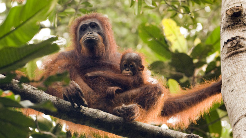 protect world's primate populations