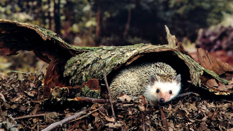 Hedgehog home built by a team of students