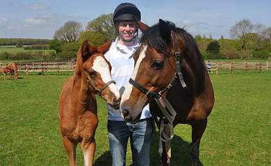 Equine Studies what subjects will you be taking in college for a teaching degree