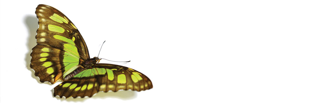 Wellbeing redesign homepage banner - butterfly