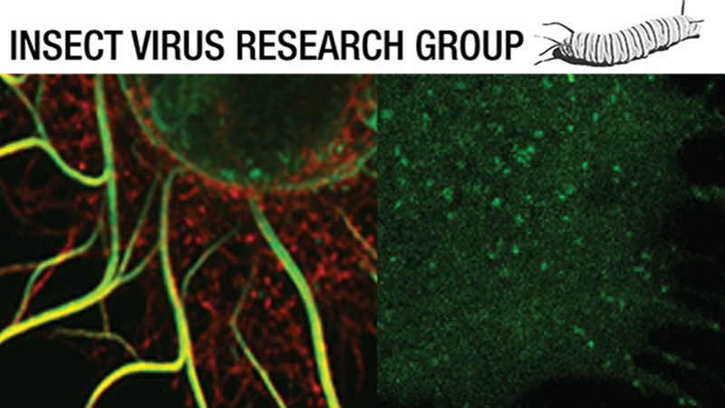 Specialisms- insect virus research group