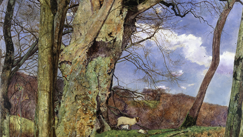 Trees and Wellbeing: Past, Present and Future