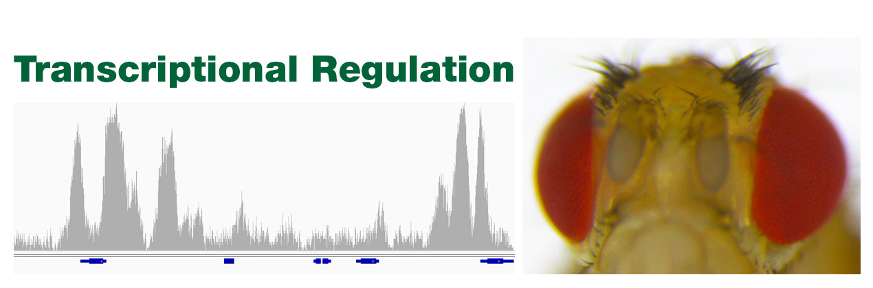 Transcriptional-Regulation-banner-1270-x-420