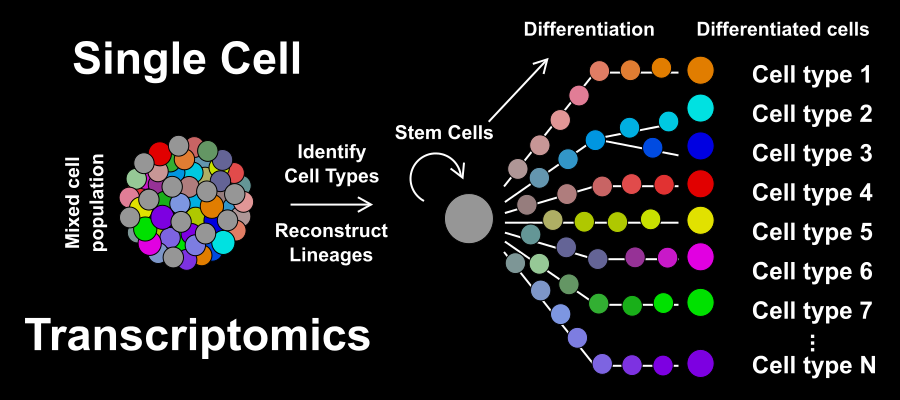 single cell transcriptomics