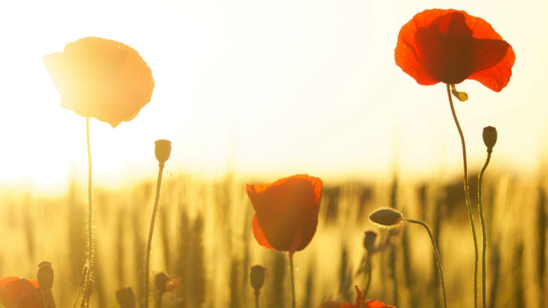 How is remembrance in schools studied?