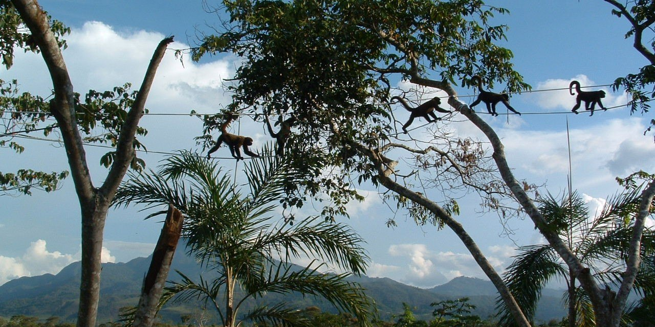 Primate Conservation Apes in the Anthropocene MSc Carousel6.jpg