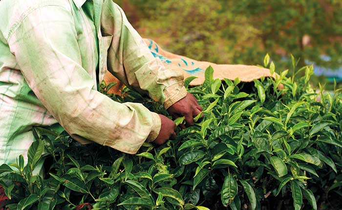 How can universities go beyond Fairtrade?