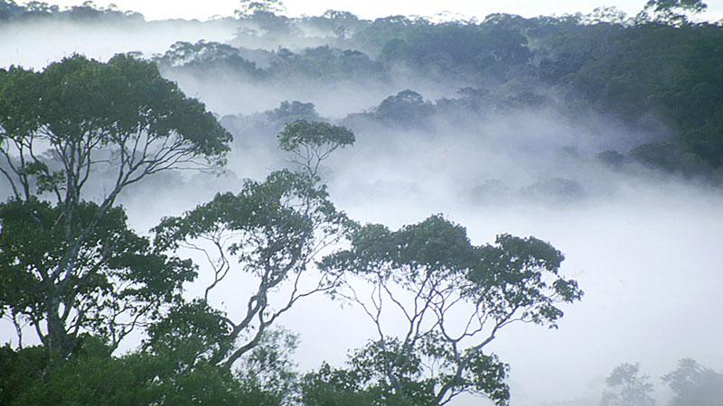 Canopy mist central Amazonia