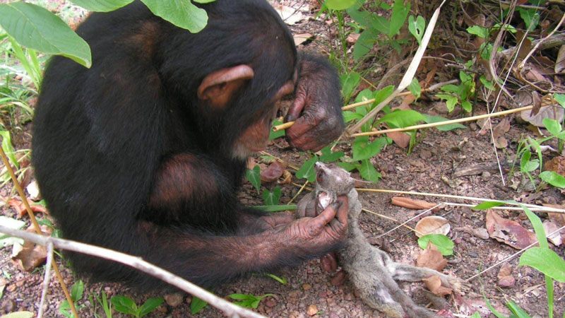 Novel study reveals the evolution of daytime sleeping patterns in nocturnal primates