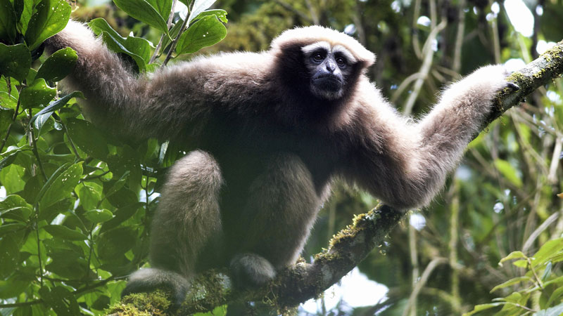 World's experts on primate conservation call for urgent action to battle impending extinction crisis