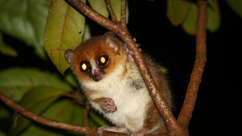 Researchers call for action to protect remaining areas of lowland forests of Madagascar to save endangered lemurs