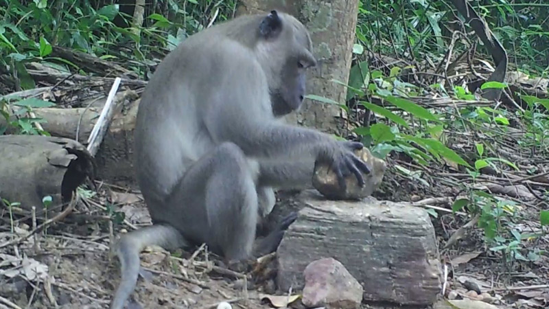 Macaques choose stone tools based on own size and strength