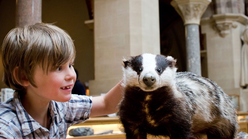 Children's understanding of animal taxidermy enhances their museum experience