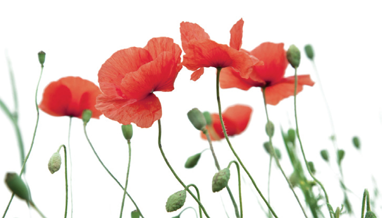 "Schools encouraged to explore ""moral and ethical themes"" in new guidance for Armistice Day"