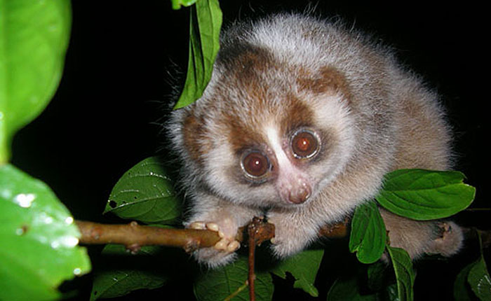Slow Loris expert steps up to the Lush Soapbox