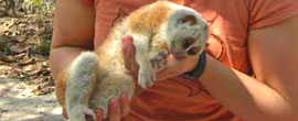 Slow loris donation