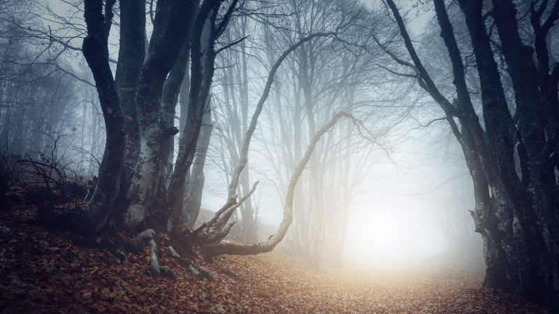 Witchcraft and magical beliefs